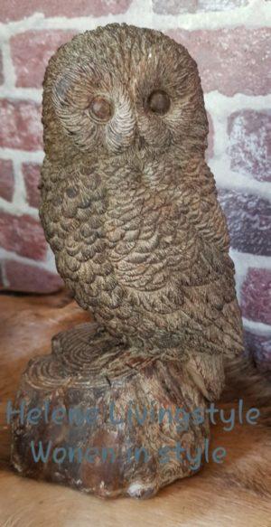 Uil beeld van polysteen