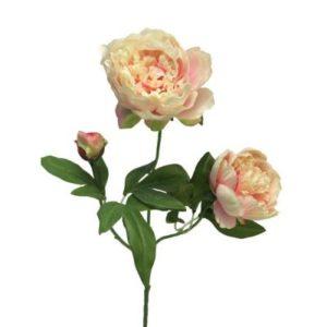 Pioenroos zijde roze